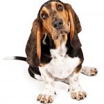 Mobile dog groomers Norfolk