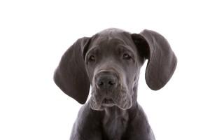 dog groomer Norwich